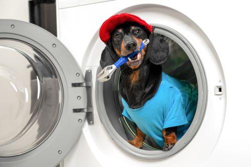 Plombier Lyon 8 - Un chien déguisé en plombier est dans une machine à laver